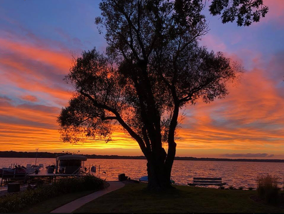 Tree on Gull Lake